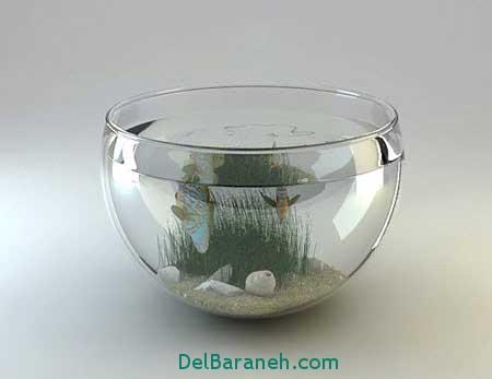 مدل تنگ ماهی (10)