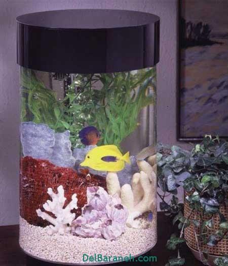 مدل تنگ ماهی (5)
