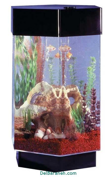 مدل تنگ ماهی (6)
