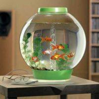 مدل تنگ ماهی | ۱۰ مدل تنگ ماهی زیبا و جدید برای عید نوروز ۹۷