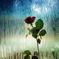 انشا در مورد روز بارانی+انشاء با موضع باران