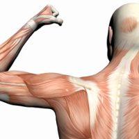ارتباط اندازه دور بازو با طول عمر