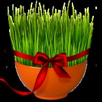 مناسب ترین زمان برای سبزه انداختن  عید نوروز ۹۷