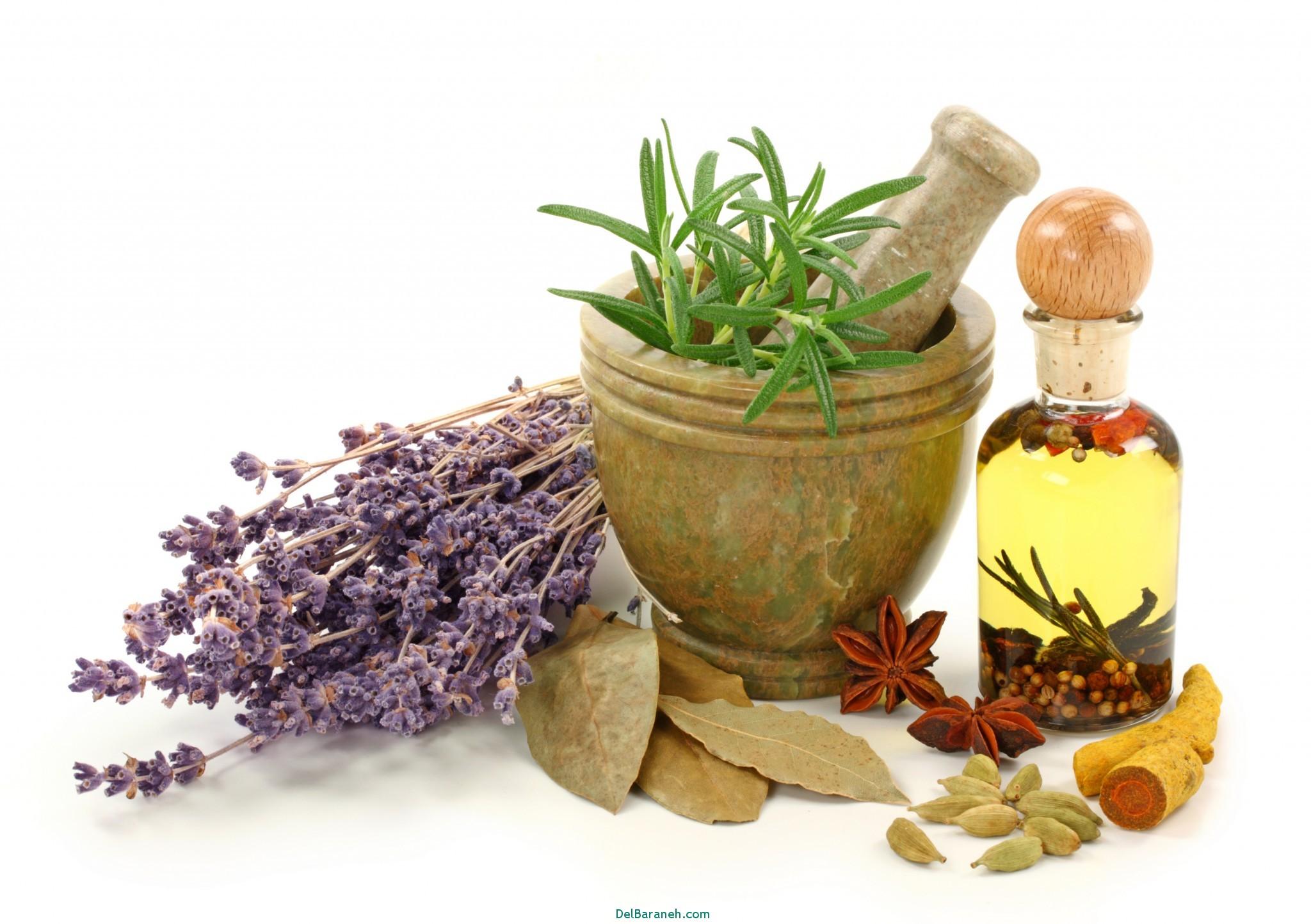 معرفی گیاهان دارویی برای درمان خانگی و قوی کبد چرب و دیابت