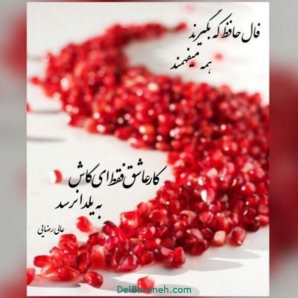 یلدا مبارک (۷)