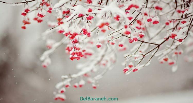 انشا در مورد زمستان (۳)