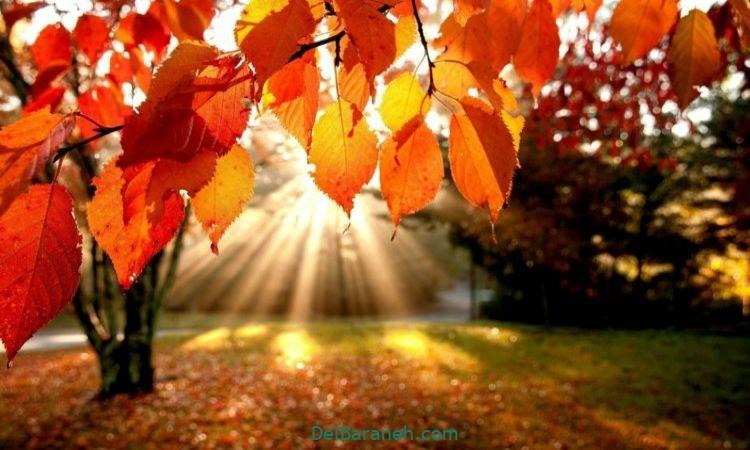 انشا درمورد پاییز پایه هشتم
