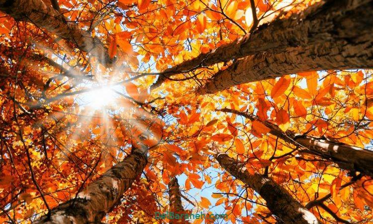 انشا ادبی در مورد پاییز با مقدمه بدنه نتیجه
