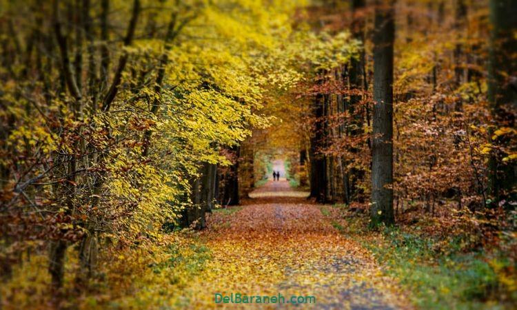 انشا در مورد پاییز (۶)