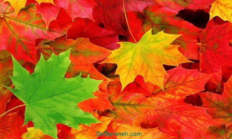 انشا در مورد پاییز (۸)