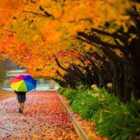 انشا در مورد پاییز | ۷ انشا ادبی و توصیفی در مورد فصل پاییز برای پایه های مختلف