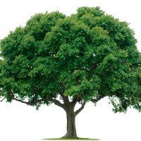 انشا درباره درخت | ۷ انشا با موضع درخت و درخت کاری ، از زبان یک درخت