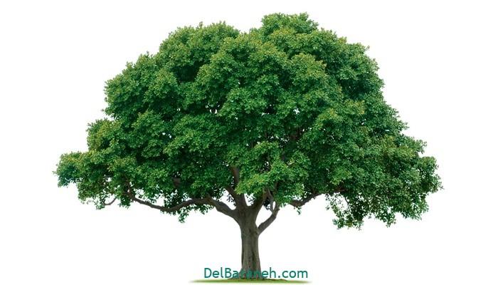 انشا درباره درخت (۱)