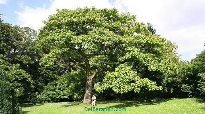 انشا درباره درخت (۱۰)