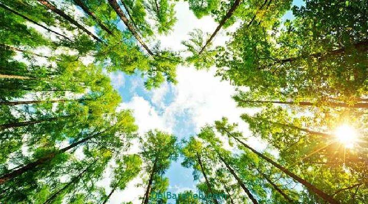 انشا درباره درخت (۴)