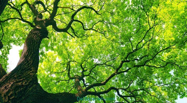 انشا درباره درخت (۵)