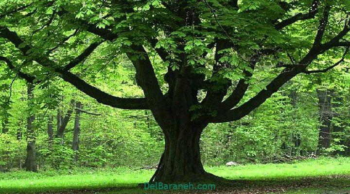 انشا درباره درخت (۷)