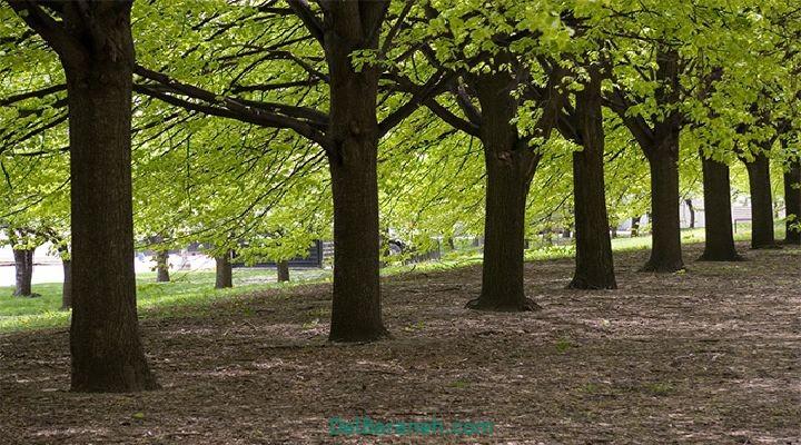 انشا درباره درخت (۸)