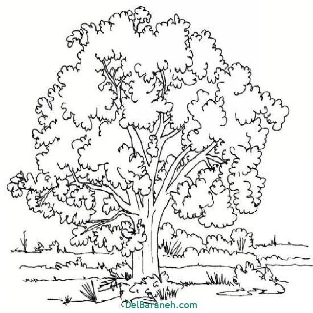 نقاشی درخت درختکاری (۵۰)