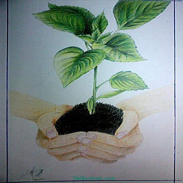 نقاشی درخت درختکاری (۵۹)