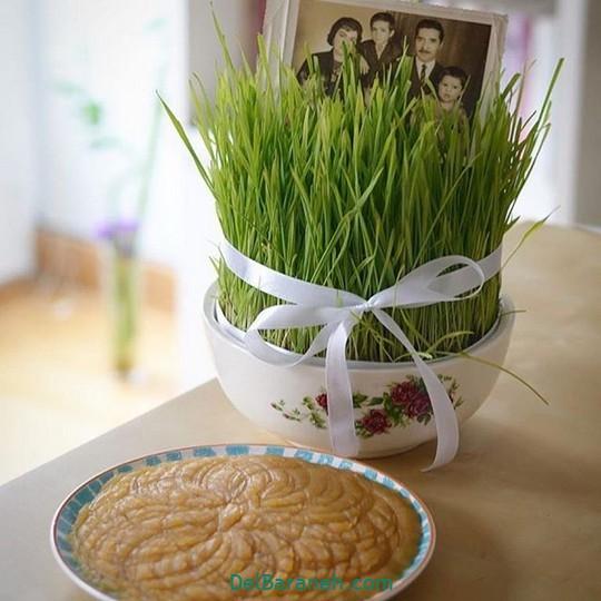 سبزه عید با گندم (۳)