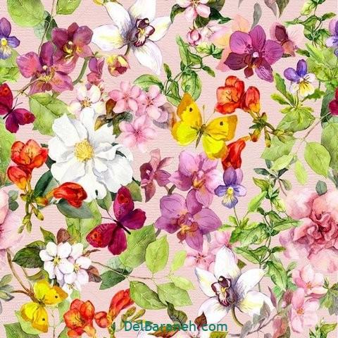 گل گلی (۱۲)