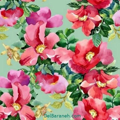 گل گلی (۱۷)