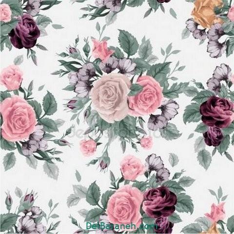 گل گلی (۲۴)