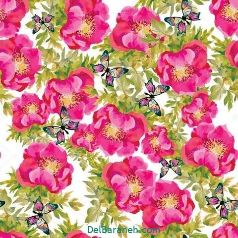 گل گلی (۳۰)