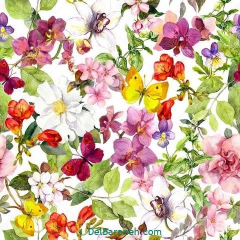 گل گلی (۳۱)