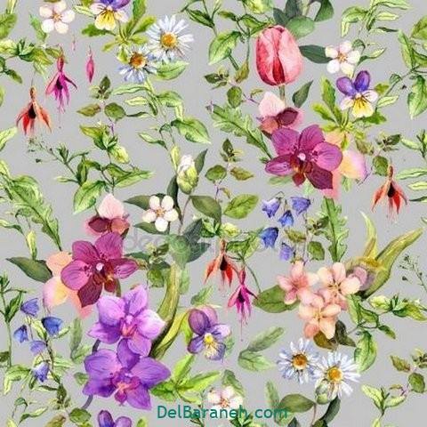 گل گلی (۳۲)
