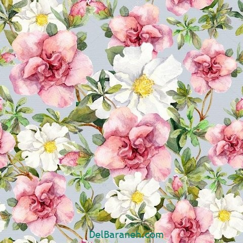 گل گلی (۳۳)