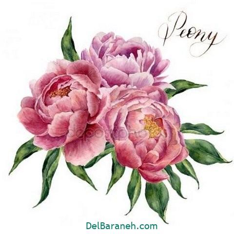 گل گلی (۳۷)