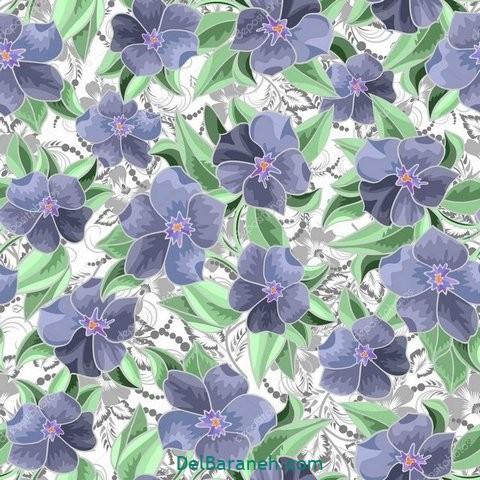 گل گلی (۵)