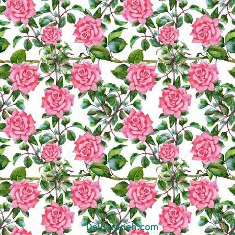 گل گلی (۶)