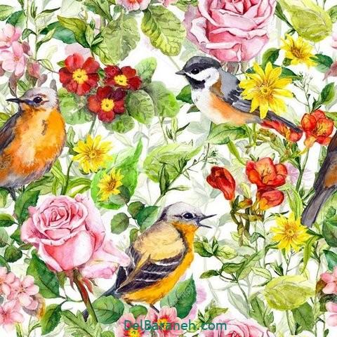 گل گلی (۷)