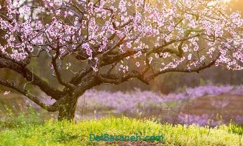 انشا درباره بهار (۱۰)