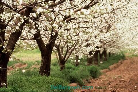 انشا در مورد بهار