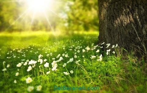 انشا درباره بهار (۵)