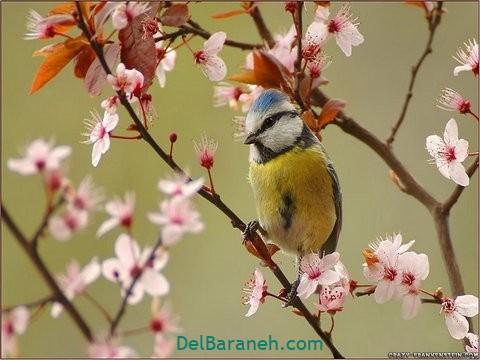 انشا درباره بهار (۷)