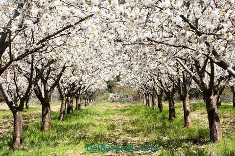 انشا درباره بهار (۹)