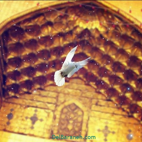 عکس تولد امام رضا علیه السلام (۸)
