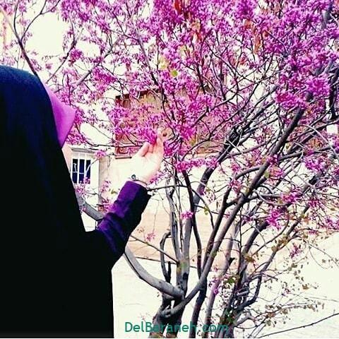 عکس دختر چادری (۶)
