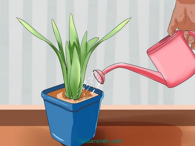 آبیاری گلدان در مسافرت (۱)
