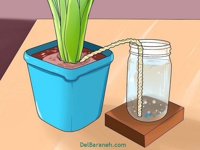 آبیاری گلدان در مسافرت (۱۲)