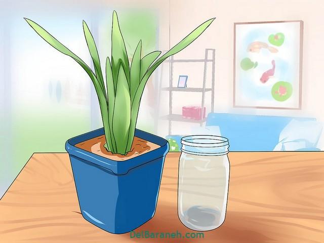 آبیاری گلدان در مسافرت (۷)