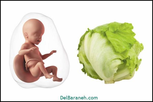 هفته سی و دوم بارداری (۱)