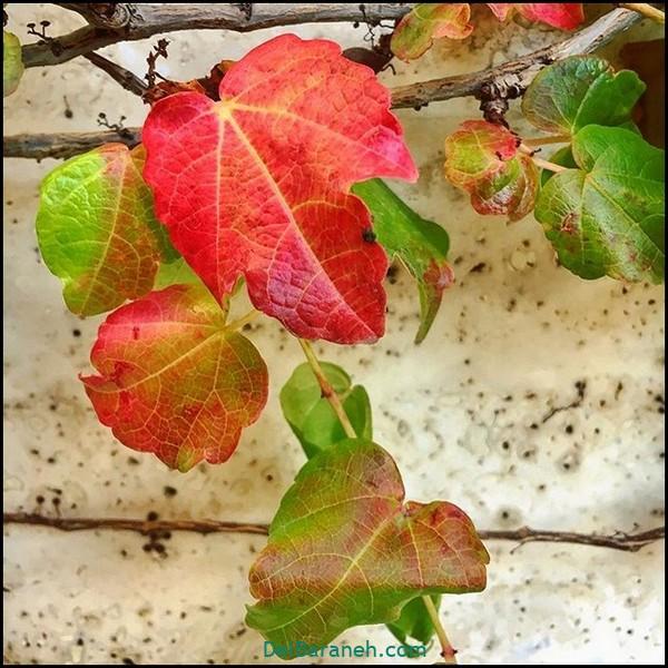 انشا کوتاه در مورد پاییز (۱)
