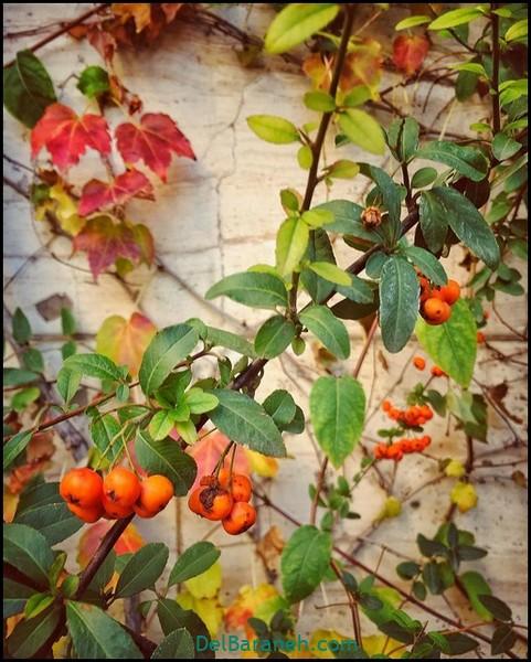 انشا کوتاه در مورد پاییز (۳)