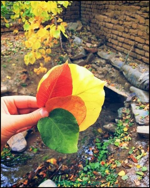 انشا کوتاه در مورد پاییز (۶)